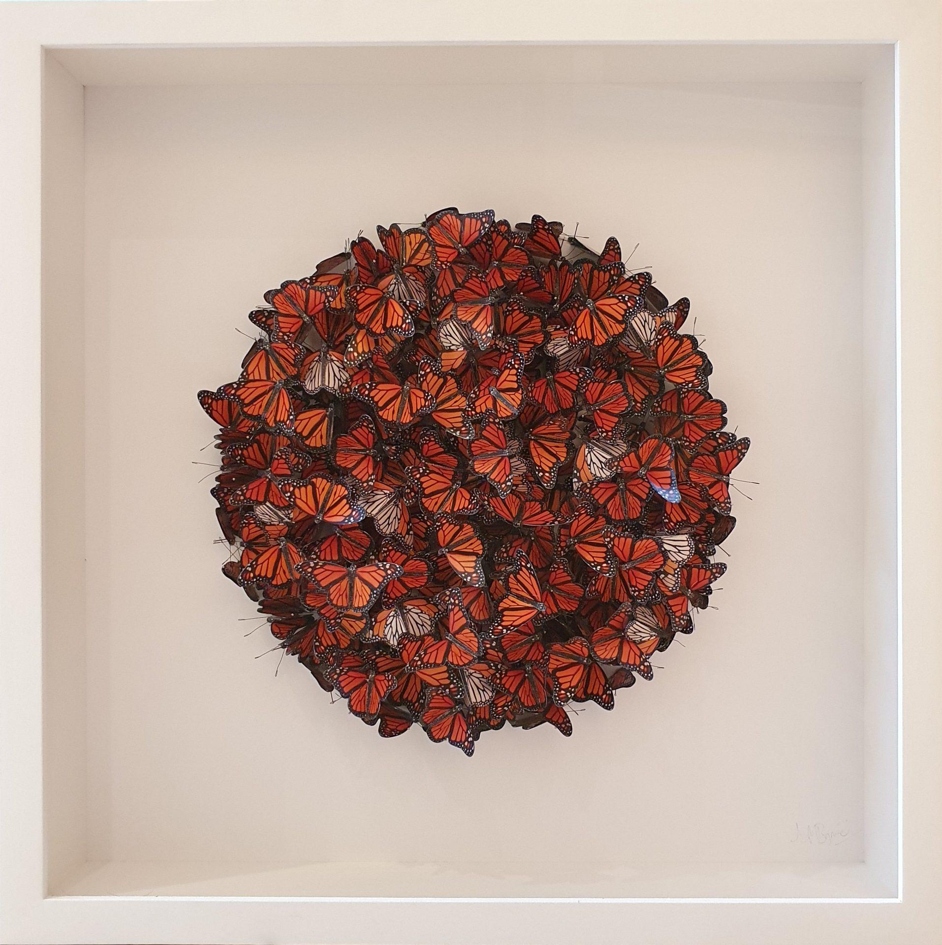 Daniel Byrne Orange Monarch Cluster 2 butterfly wall art for sale