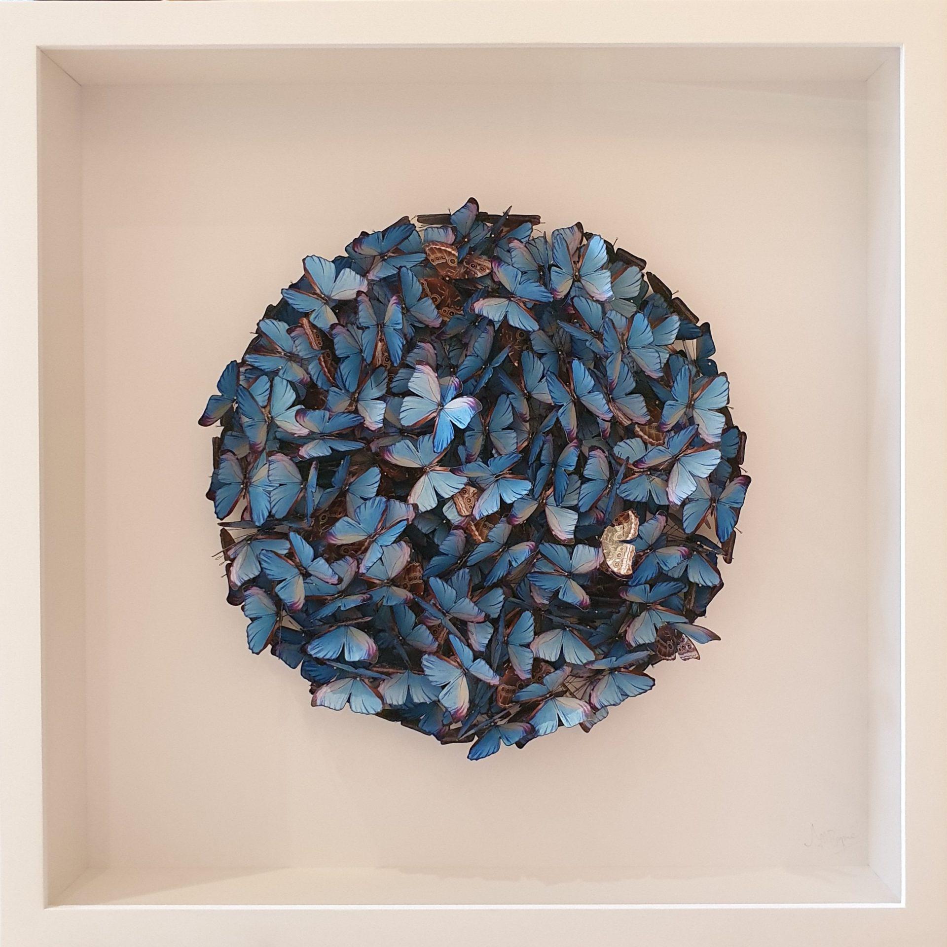 Daniel Byrne Blue Morpho Cluster 2 original butterfly wall art for sale